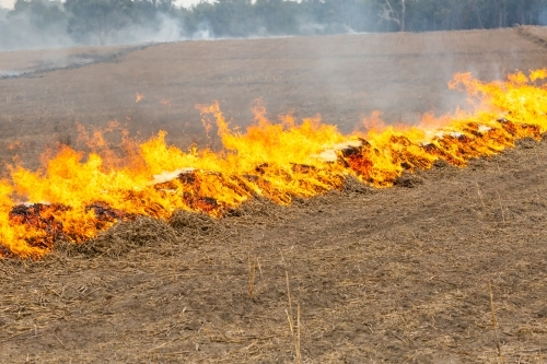Fire burning along a windrow of straw in a paddock