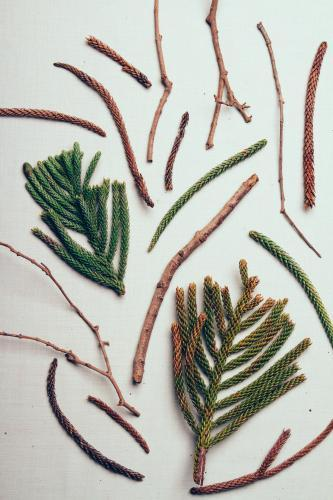 Flat lay collection of pine twigs and branches on white