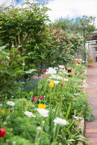 Flower Garden and Garden Path