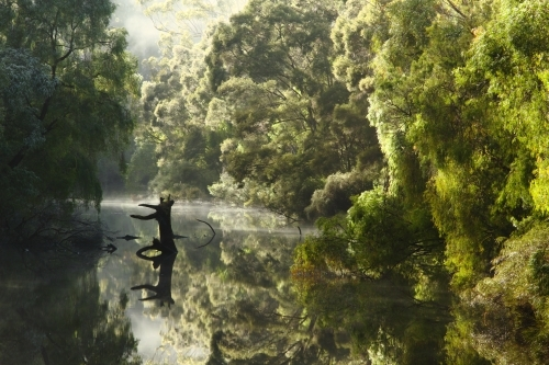 Fog and reflections on the Warren River, Western Australia.
