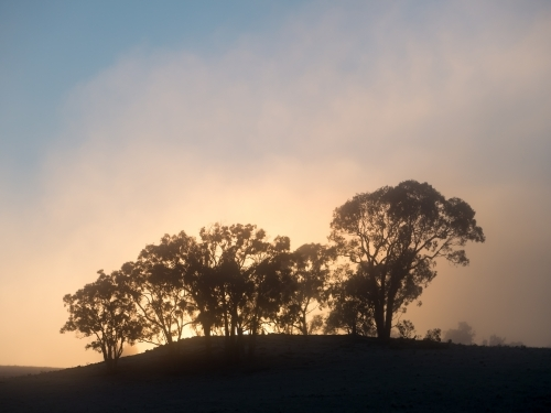Foggy sunrise through a group of gum trees on a ridge