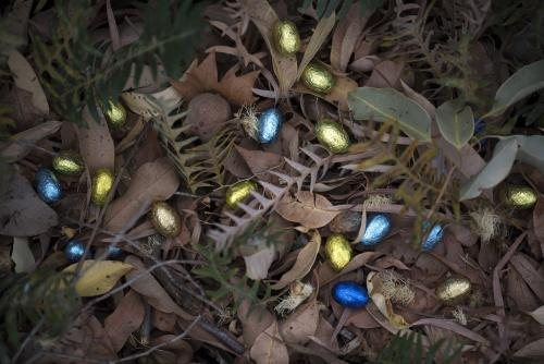 foil easter eggs in native Australian bush leaves