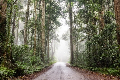 Following down the misty road in a rainforest