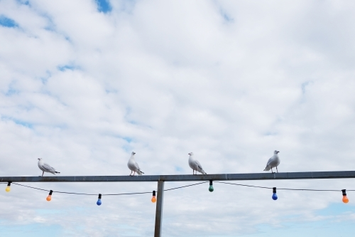 Four seagulls sitting on a fence with lights