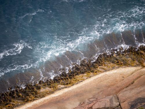 Pretty wave pattern and seaweed viewed from a cliff top