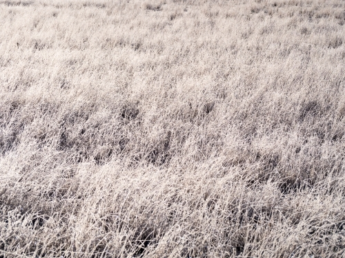 Frost covered grass in a paddock