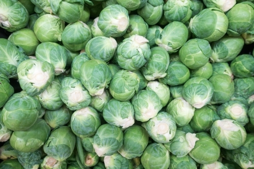 Full screen of brussels sprouts loose in the market.