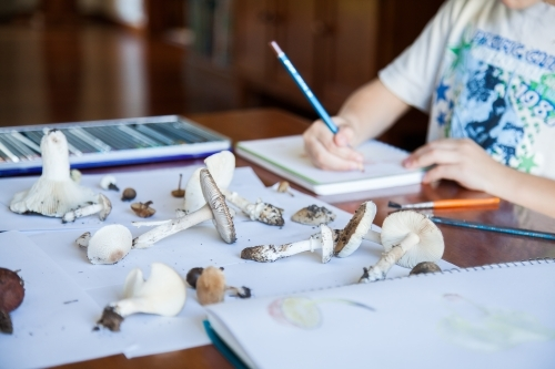 Home-schooled children drawing fungi in nature journals
