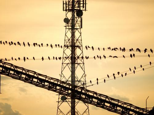 Galahs silhouetted on wires with a mobile phone tower