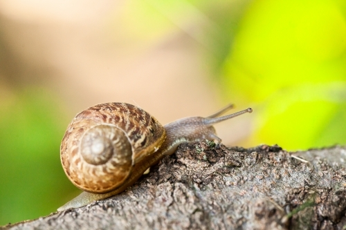 Garden snail on a tree branch