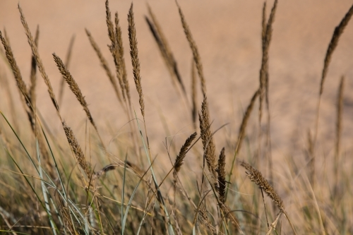 grass against a background of sand