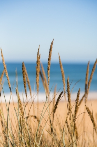 Grass against a background of sea and beach