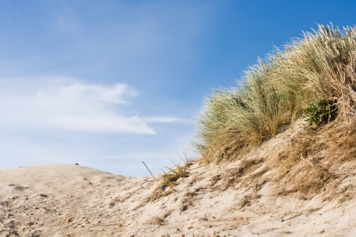 grasses and sand dunes at coastal location
