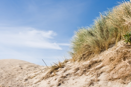 Grasses blowing on sand dunes at a beach in summer