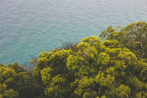 Green and gold canopy of trees with ocean in background