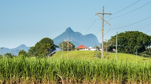 Green sugarcane field in front of distant Mount Warning mountain range.