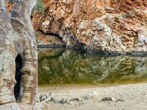 Gum tree and pool at Ormiston Gorge and pound