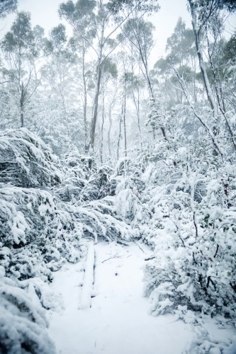 gum trees and plants in snow, vertical