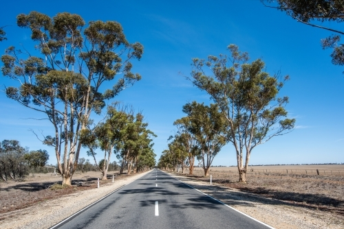 Gum trees on both sides of the road.