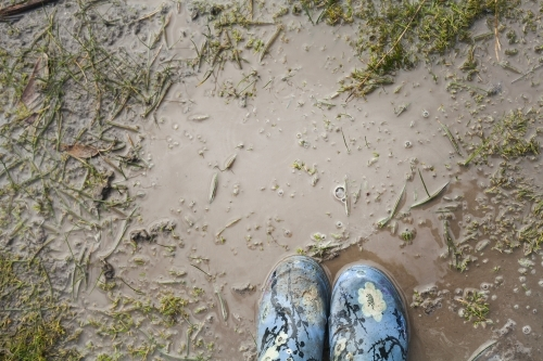 Gumboots standing in a muddy puddle from above.