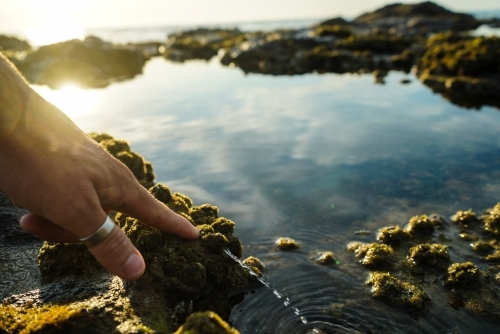 Hand pushing water out of squishy sea algae