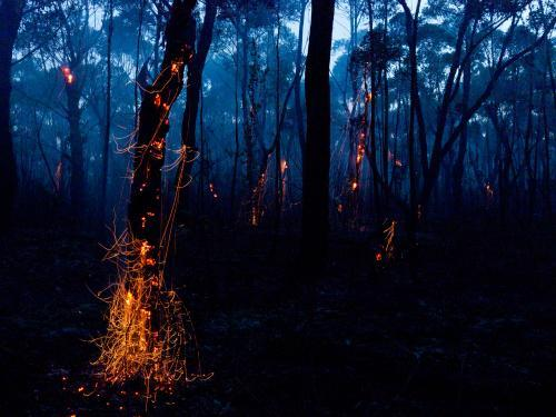 Glowing embers on a tree and smoke after a bushfire