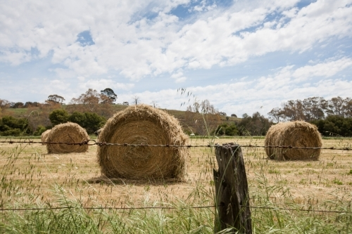 Hay bales in paddock behind a barbed wire fence