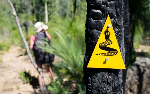 Hiker on Marked trail with trail markers posted to burnt tree