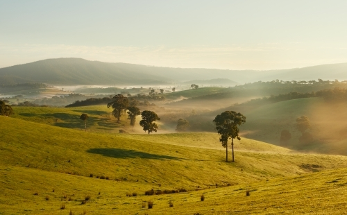 Hilly Farmland on Frosty Morning on Urban Fringe of Melbourne