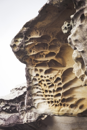 Honeycomb weathering on cliff at Bondi Beach