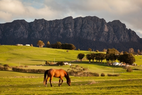Horse grazing with mountain backdrop.