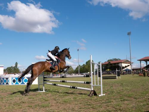 Horse jumping in a show jumping competition