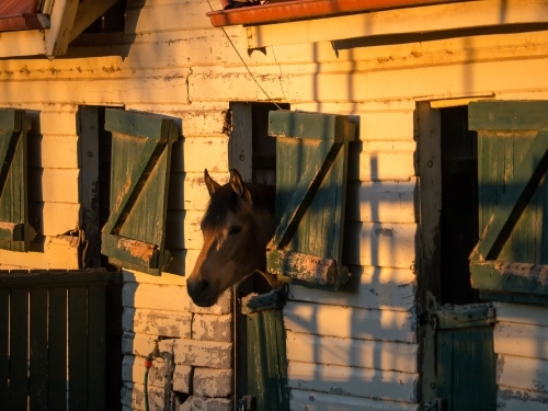Horse looking out stables window in the evening light