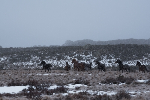 Horses running over snow covered plain