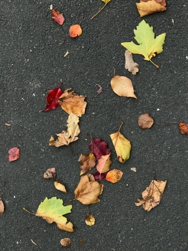 Colourful atumn leaves on a pavement