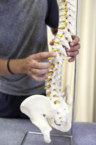 Detail of physiotherapist holding spine model