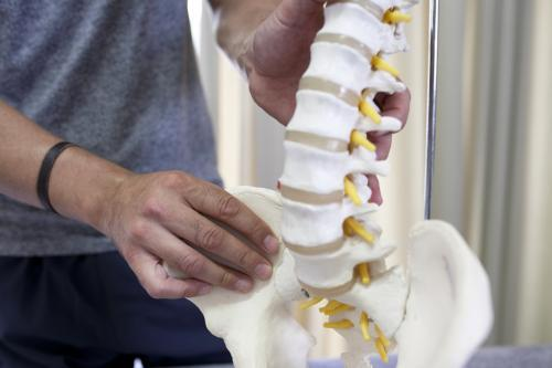 Close up of physiotherapist holding model of spine