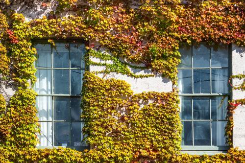 A building facade covered in coloured ivy.