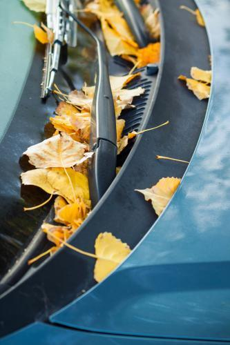 Autumn leaves on the windsreen of a car