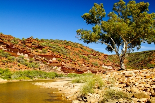 A creek and sandstone cliffs with gum tree beside water