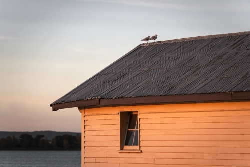 Two birds sitting on roof of boatshed