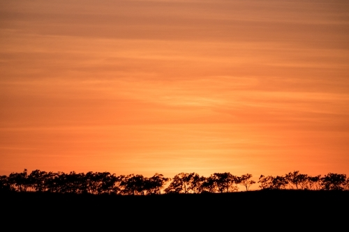 Landscape long shot of silhouette of row of trees with orange hue sunset