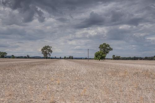 Landscape of dry fields and cloudy skies