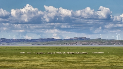 Landscape of wind turbines along edge of Lake George & grazing sheep