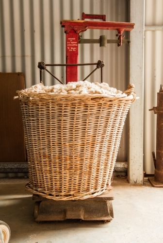Large cane basket of wool on vintage scales in a shed