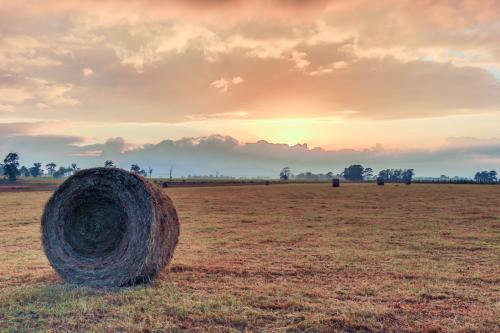 Large round hay bale roll