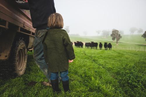 Little girl & father watching cattle