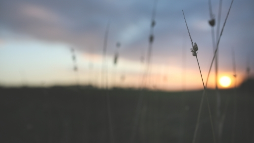 Long grass stalks with out of focus sunset background
