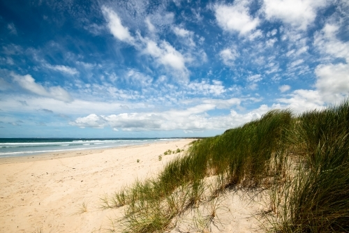 Long sandy ocean beach with coastal vegetation and dramatic blue cloudy sky