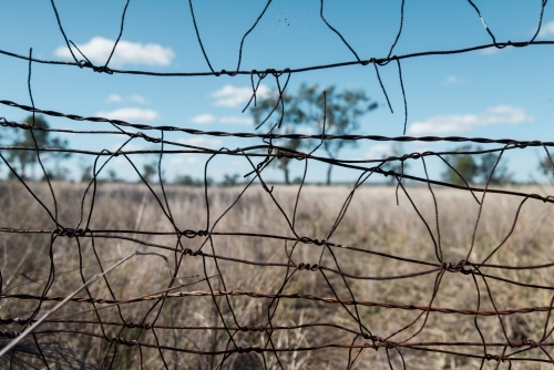 Looking through a wire fence